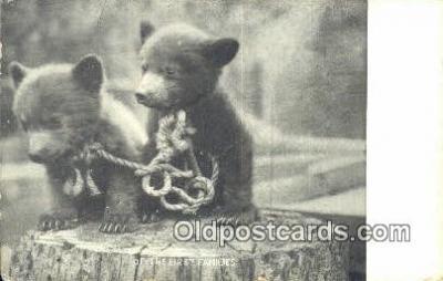 ber001475 - Bear Postcard Bear Post Card Old Vintage Antique