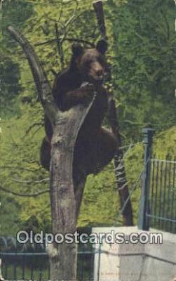 ber001477 - Washington Park, Milwaukee Wisconsin, USA Bear Postcard Bear Post Card Old Vintage Antique