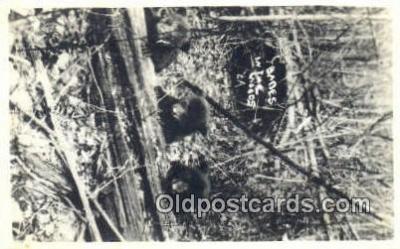 ber001479 - Babies in The Woods Bear Postcard Bear Post Card Old Vintage Antique