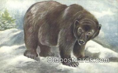 ber001480 - Grizzly Bear Postcard Bear Post Card Old Vintage Antique