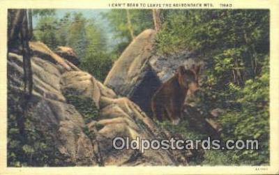 ber001481 - Adirondack Mountains, NY USA Bear Postcard Bear Post Card Old Vintage Antique