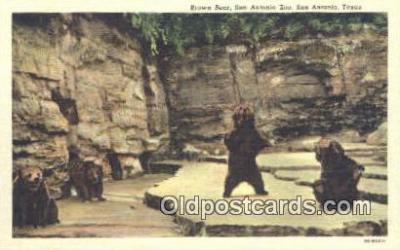 ber001483 - San Antonio Texas Zoo USA Bear Postcard Bear Post Card Old Vintage Antique
