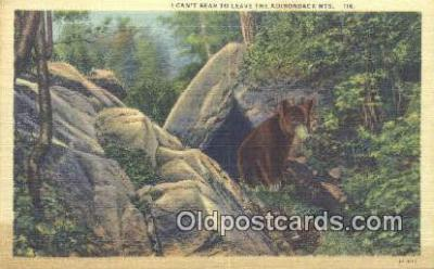 ber001565 - Adirondack Mountains, NY USA Bear Postcard Bear Post Card Old Vintage Antique