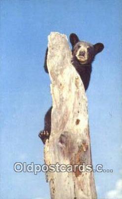 ber001596 - Shenandoah National Park, VA USA Bear Postcard Bear Post Card Old Vintage Antique