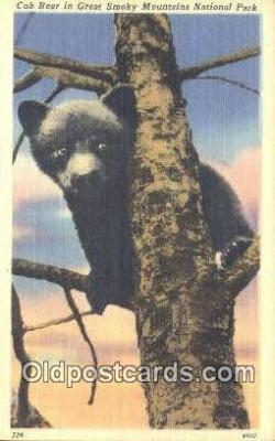 ber001597 - Bear Postcard Bear Post Card Old Vintage Antique