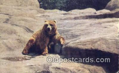 ber001601 - Chicago Zoo Brookfield, Ill Bear Postcard Bear Post Card Old Vintage Antique