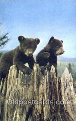 ber001614 - Lake Placid, NY USA Bear Postcard,  Bear Post Card Old Vintage Antique