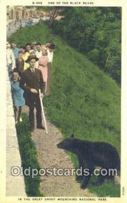 ber001615 - Great Smoky Mnt. National Park Bear Postcard,  Bear Post Card Old Vintage Antique