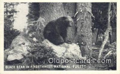 ber001722 - Northwest National Forest Bear Postcard,  Bear Post Card Old Vintage Antique