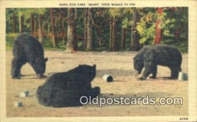 ber001754 - Good Wishes to you, Bear Postcard Post Card Old Vintage Antique