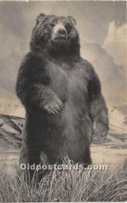 ber006078 - Bear Postcard