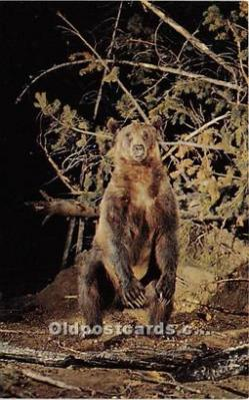 ber006082 - Bear Postcard