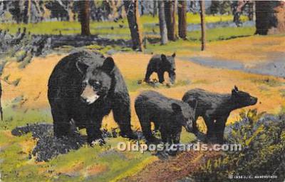 ber006083 - Bear Postcard