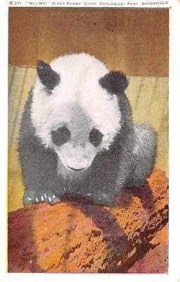 ber007423 - Bear Post Card Old Vintage Antique