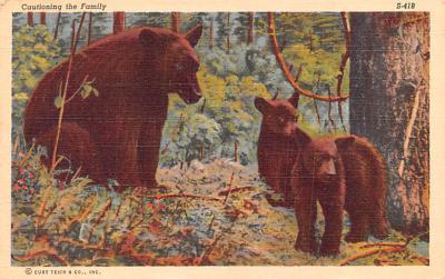 ber007425 - Bear Post Card Old Vintage Antique