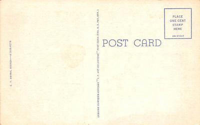 ber007425 - Bear Post Card Old Vintage Antique  back