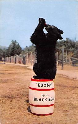 ber007427 - Bear Post Card Old Vintage Antique