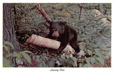 ber007429 - Bear Post Card Old Vintage Antique