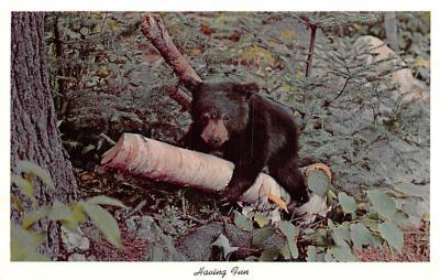 ber007437 - Bear Post Card Old Vintage Antique