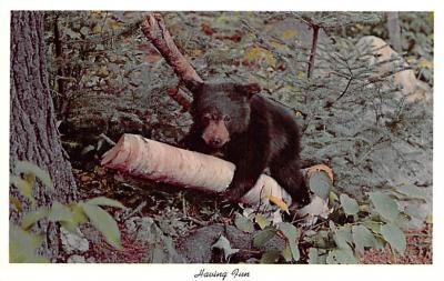 ber007439 - Bear Post Card Old Vintage Antique