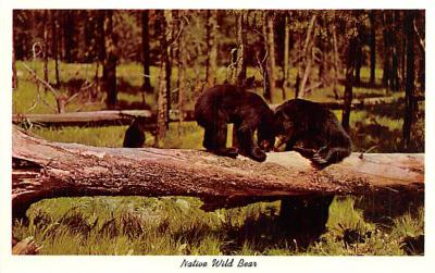 ber007441 - Bear Post Card Old Vintage Antique