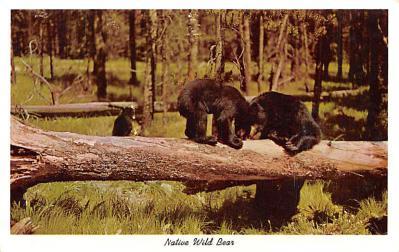 ber007443 - Bear Post Card Old Vintage Antique