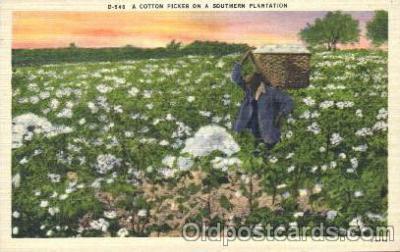 a cotton picker on a southern Plantation