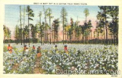 bla001325 - A cotton fiield down South Black, Blacks Postcard Post Card