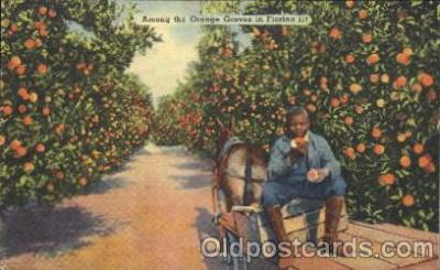 Orange groves in Florida, USA