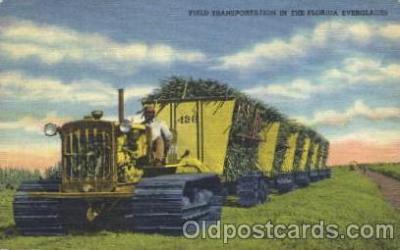 Transportation The Florida Everglades, USA