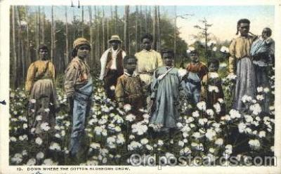 bla001360 - The cotton Blossoms Grow, Atlanta, Ga., USA Black, Blacks Postcard Post Card