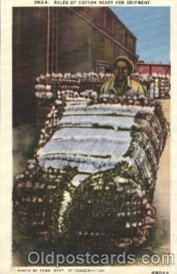 bla001468 - Series D524,Tenn, USA Black, Blacks Postcard Post Card
