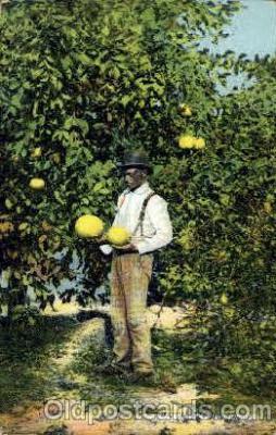 bla001484 - Grapefruit Tree In Florida USA Black, Blacks Post Card Post Card