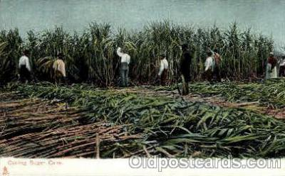 bla001539 - Cutting sugar cane Black, Blacks Post Card Post Card
