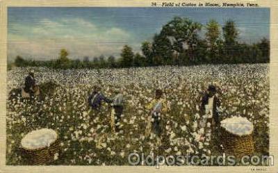 bla001633 - Field of cotton Bloom, Memphis, Tenn., Tennessee, USA Black, Blacks Postcard Post Card