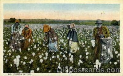 bla001641 - Picking cotton Black, Blacks Postcard Post Card