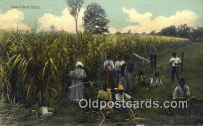 bla050189 - Sugar Cane Field Old Vintage Antique Postcard Post Card
