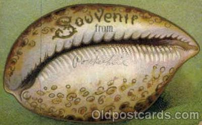bor001023 - Shells, Shell Border, Postcard Post Card