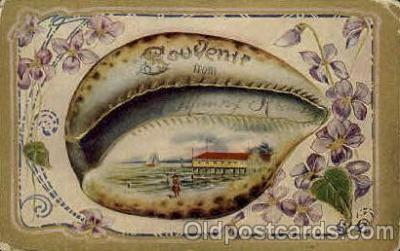 bor001029 - Shells, Shell Border, Postcard Post Card