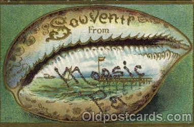 bor001037 - Moosic, PA, Pennsylvania, USA Shells, Shell Border, Postcard Post Card