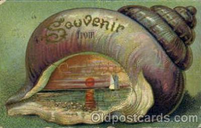 bor001068 - Pittsfield, MA, Massachusetts, USA Shells, Shell Border, Postcard Post Card