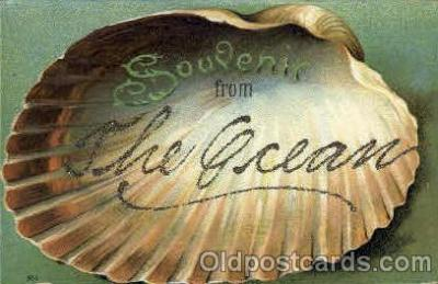 bor001069 - Shenectady, NY, New York, USA Shells, Shell Border, Postcard Post Card