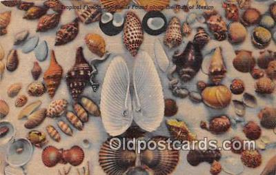 bor001089 - Shells, Vintage Collectable Postcards