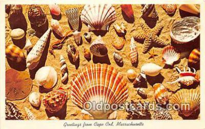 bor001100 - Shells, Vintage Collectable Postcards