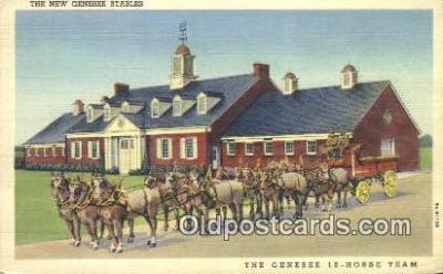 bre001192 - New Genese Stables Rochester, NY, USA Postcard Post Cards Old Vintage Antique