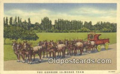 bre001197 - The Genesee 12 Horse Team Rochester, New York, USA Postcard Post Cards Old Vintage Antique