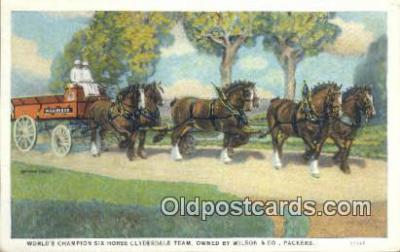 Six Horse Clydesdale Team, Wilson & Co