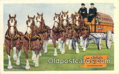 bre001261 - Wilson & Co Six Horse Hitch of Clydesdales Meat Packers, Chicago, USA Postcard Post Cards Old Vintage Antique