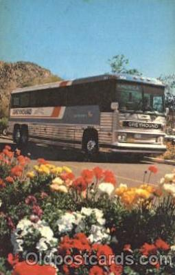 Greyhound Americancruiser