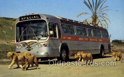 bus010116 - Greyhound Bus Buses, Old Vintage Antique Post Card Postcard